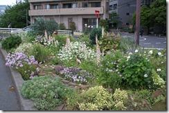季節の花が咲き乱れた今年5月の花壇
